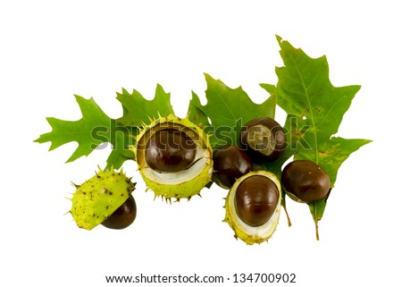 autumn leaf composition with chestnuts and shell isolated on white background - stock photo