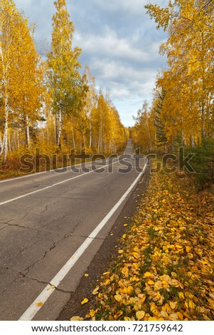 Autumn leaf fall. Yellow leaves on the side of the forest road