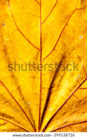 Autumn leaf gift of Golden autumn. Early autumn is the time for random, unique and very simple gifts. - stock photo