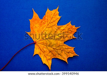 Autumn leaf gift of Golden autumn. Early autumn is the time for random, unique and very simple gifts - stock photo