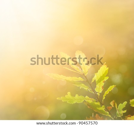 Autumn leaf in the morning. Background with autumn colors and copyspace - stock photo