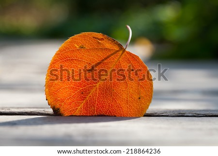 Autumn leaf in the sunlight. Close-up, texture and silhouette. Soft focus. - stock photo