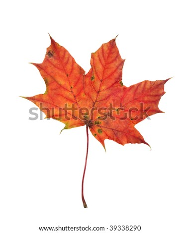 Autumn leaf isolated on a white background