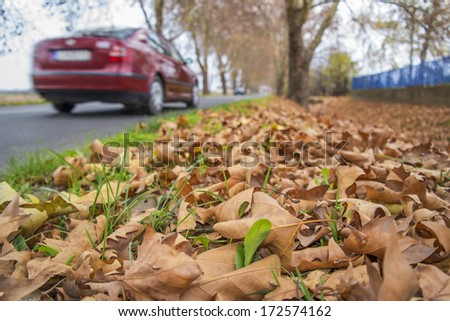 Autumn leaf litter-covered roadside. - stock photo