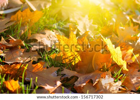 Autumn leaf litter for background - stock photo