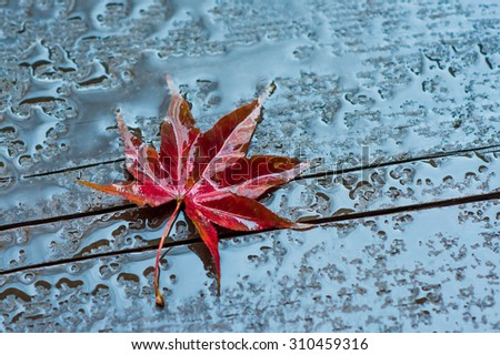 autumn leaf on a wet wooden surface - stock photo