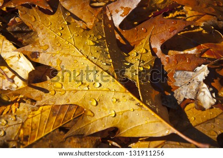 Autumn leaf on forest floor, covered in water droplets - stock photo