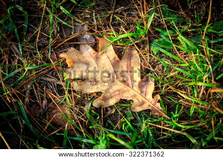 Autumn leaf on green grass - stock photo