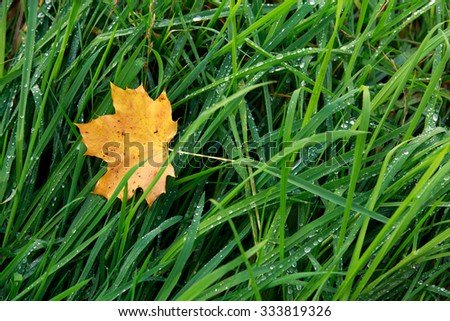 autumn leaf on morning dew green grass. - stock photo