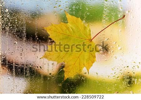 Autumn leaf on window glass close-up - stock photo