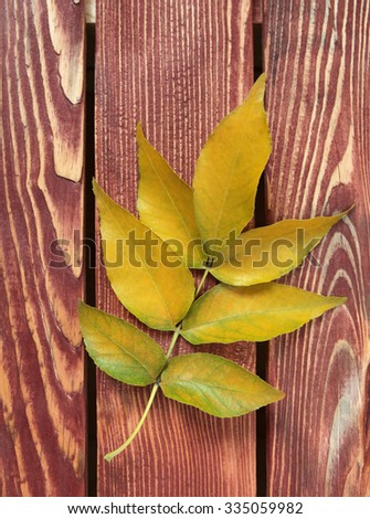 Autumn leaf on wooden background textural - stock photo