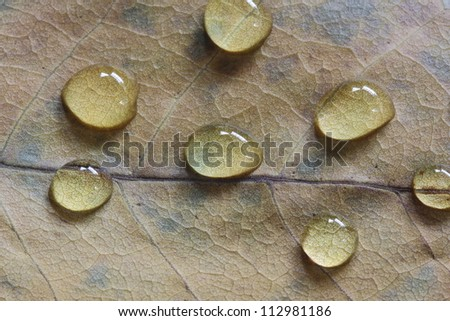 Autumn Leaf with Dew Drops - stock photo