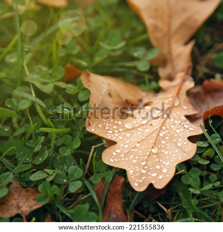 Autumn leaf with drops of water, lie on the green grass - stock photo