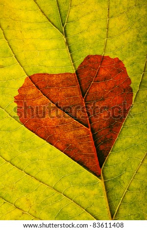 autumn leaf with heart - stock photo