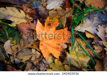 autumn leafage - abstract natural background - stock photo
