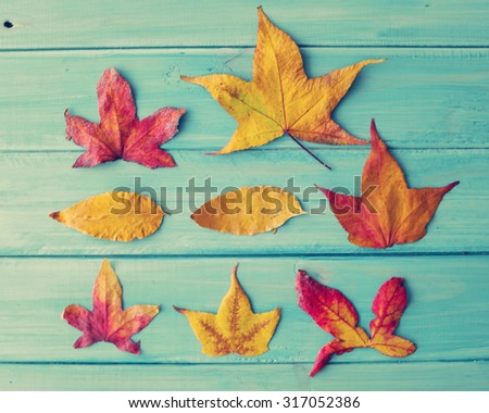 Autumn leafs - stock photo
