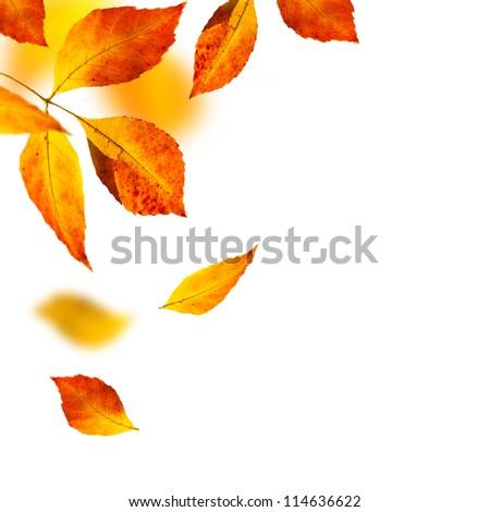 autumn leafs on white background - stock photo