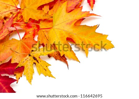 autumn leafs over white
