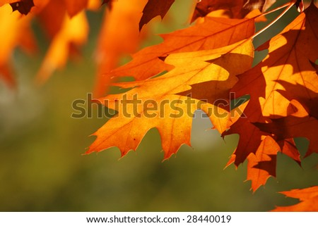 Autumn leaves, abstract autumn background - stock photo
