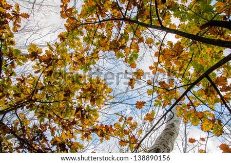 Autumn leaves against blue sky. - stock photo