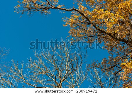 Autumn leaves against great blue sky with space for your copy text - stock photo