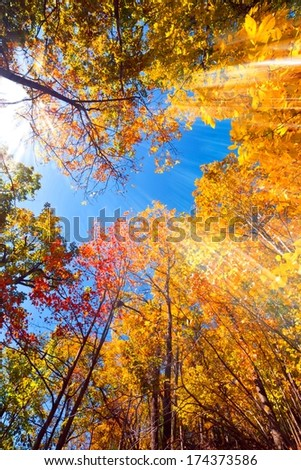 Autumn leaves and a blue sky with light streaks, wide angle. - stock photo