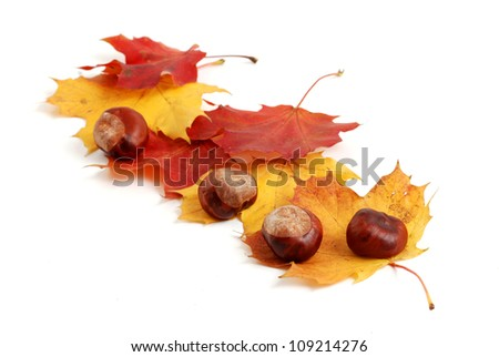 autumn leaves and chestnut - stock photo