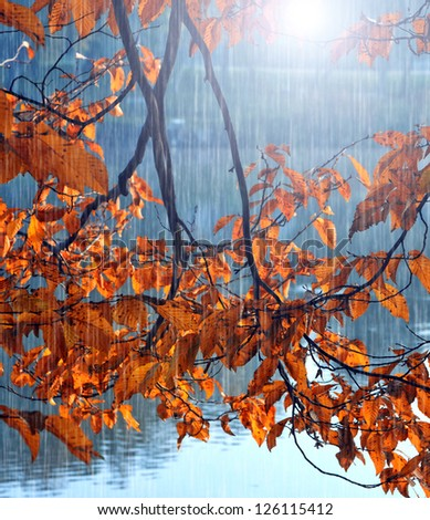 Autumn leaves and lake in rain - stock photo