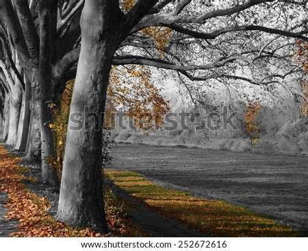 autumn leaves and melancholy - stock photo
