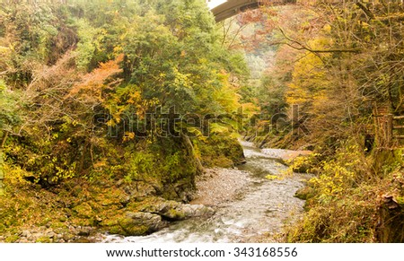 Autumn leaves and river in the mountains.