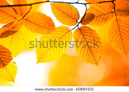 autumn leaves background in a sunny day - stock photo