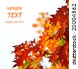Autumn leaves background with sample text. Shallow focus - stock photo