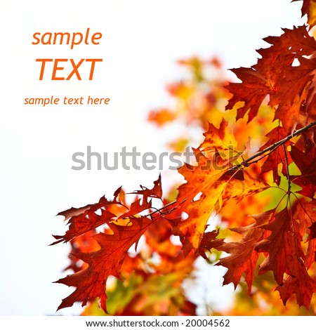 Autumn leaves background with sample text. Shallow focus