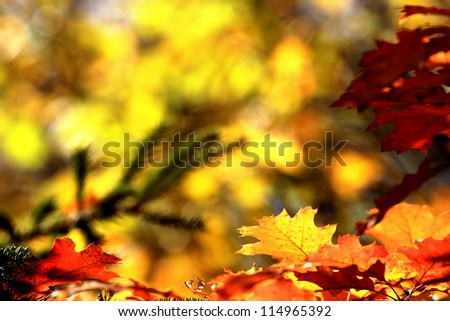 autumn leaves background with vibrant fall colors - stock photo
