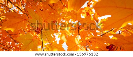 Autumn leaves blowing in the wind - stock photo
