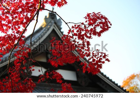 autumn leaves change the color in the japan park view - stock photo