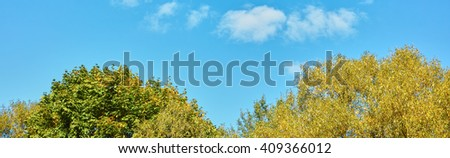 Autumn leaves crowns of trees on a background of blue sky panorama