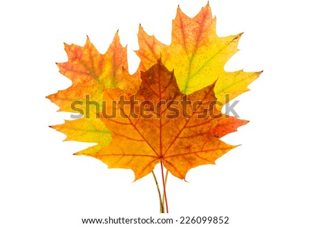 Autumn leaves decorative - stock photo