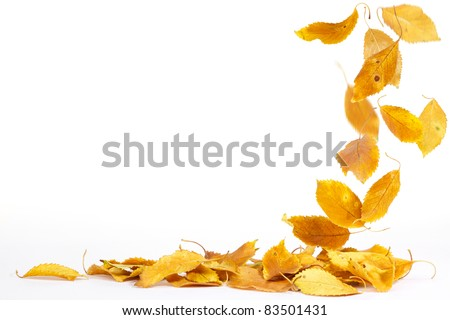 Autumn leaves falling to the ground - stock photo