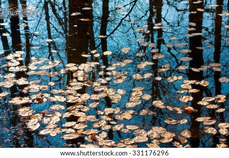 Autumn leaves floating on the surface of water - stock photo