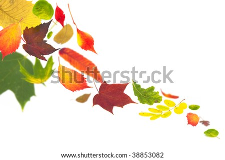 autumn leaves fluttering to the ground on white - stock photo