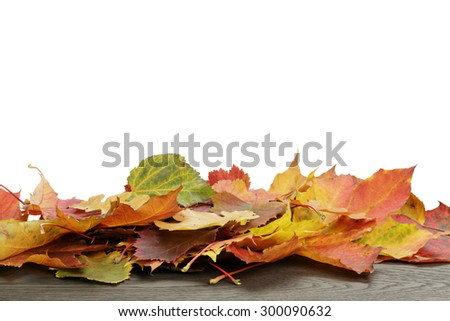 autumn leaves for border composition, isolated on white background - stock photo
