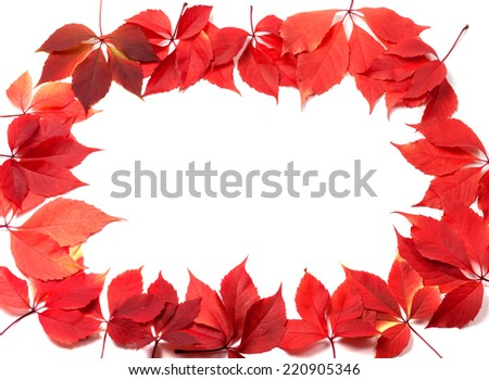 Autumn leaves frame (Virginia creeper leaves). Isolated on white background.
