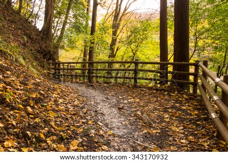 Autumn leaves.Hiking Trail. - stock photo