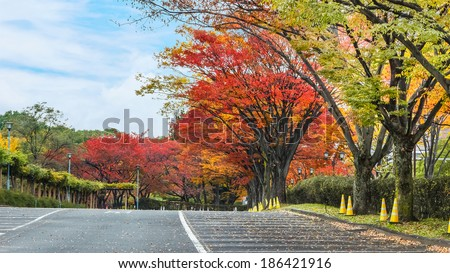 Autumn leaves in a parking lot - stock photo