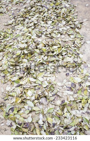 Autumn leaves in city street, nature - stock photo