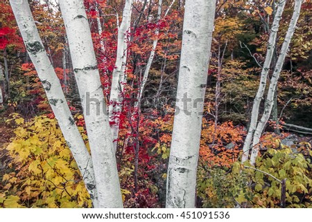 Autumn leaves in forest in the Northeast of the USA - stock photo