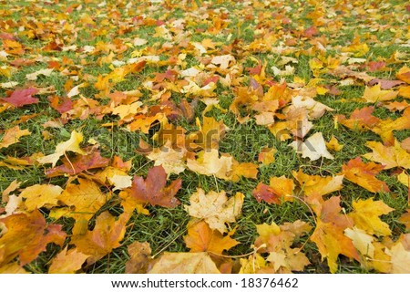Autumn leaves in October - stock photo