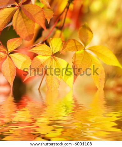 Autumn leaves in rendered water - stock photo