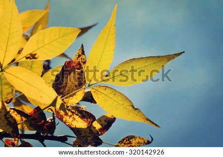 Autumn leaves in soft light, nature background - stock photo